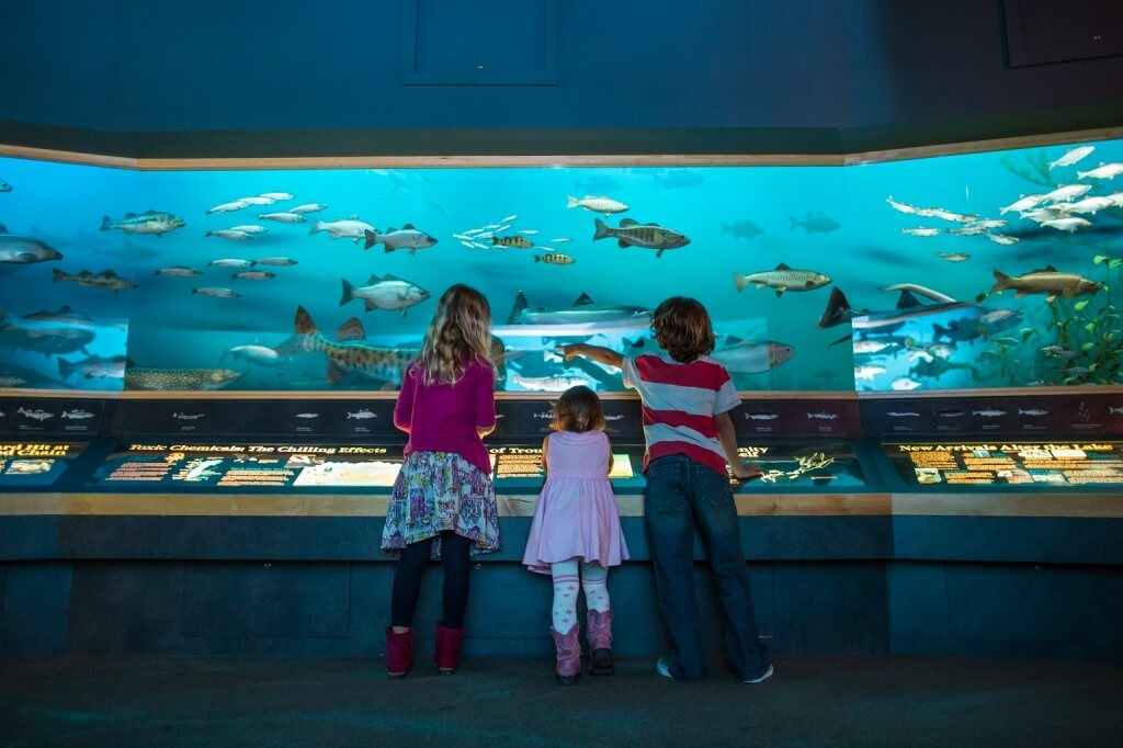 Young kids point out fish in West Michigan Habitats exhibit at the fish display