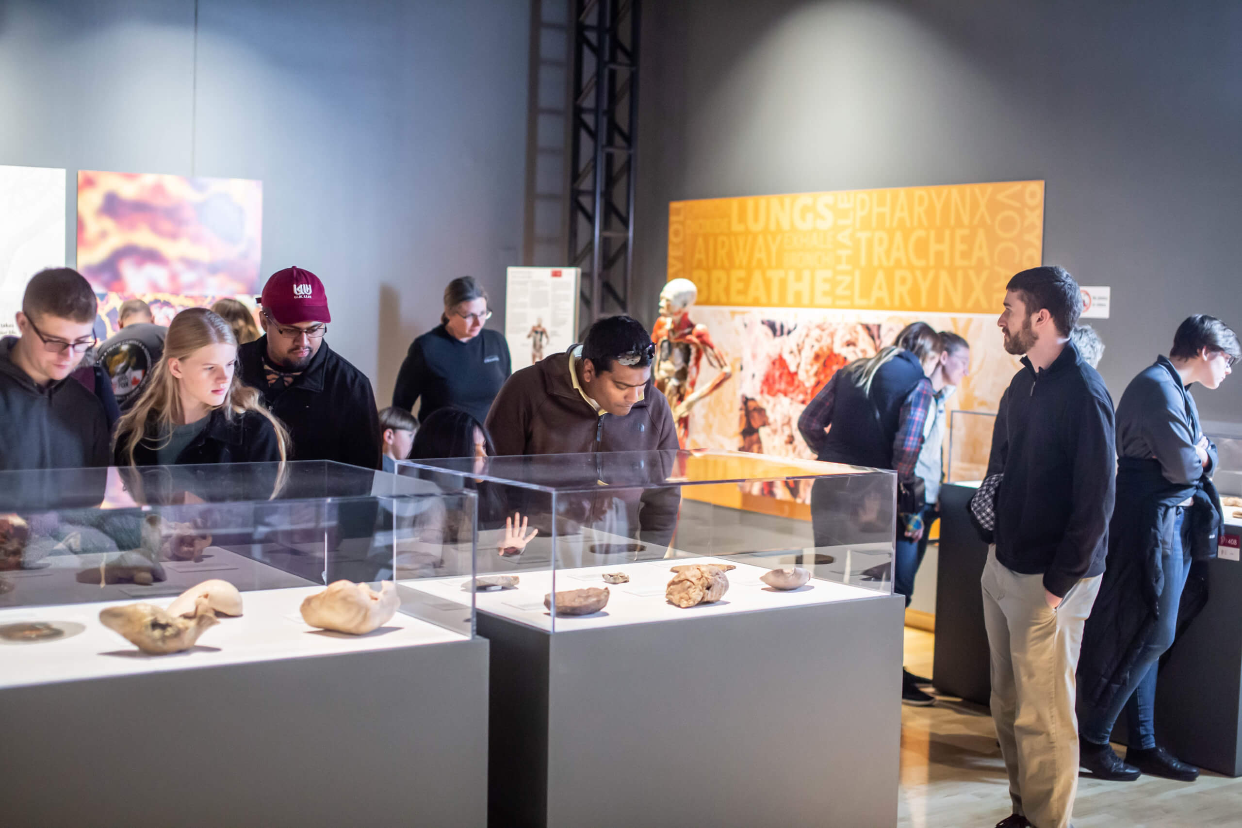 Visitors explore the respiratory and digestive systems in the Bodies Revealed exhibit