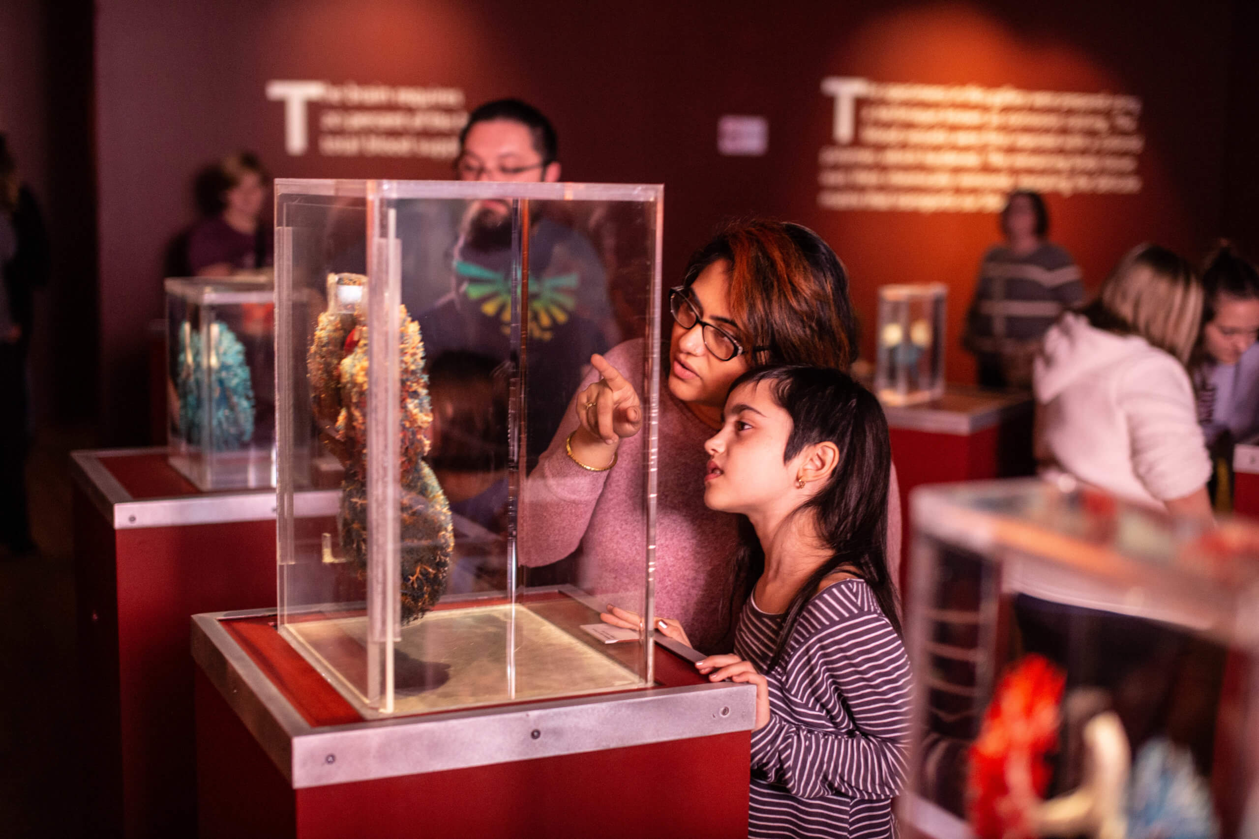 Mom and daughter examine ciruclatory system in the Bodies Revealed exhibit