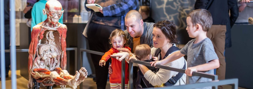 Parents with young kids examine a sitting body in the Bodies Revealed exhibit