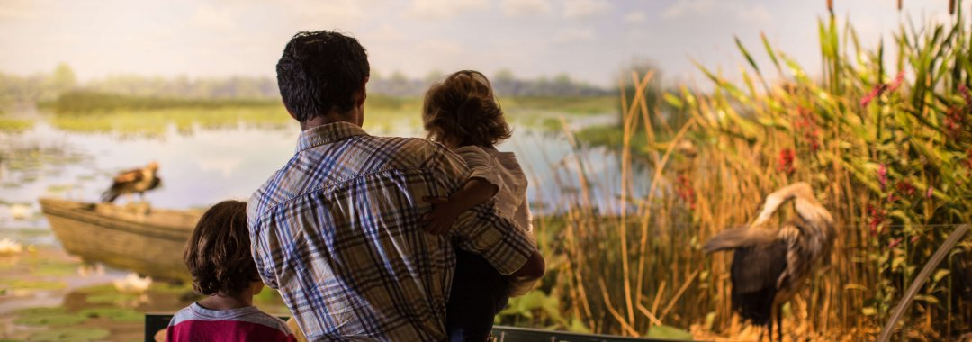 Dad with young kids look at marsh habitat in West Michigan Habitats exhibit